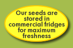 Our seeds are stored in commercial fridges for maximum freshness